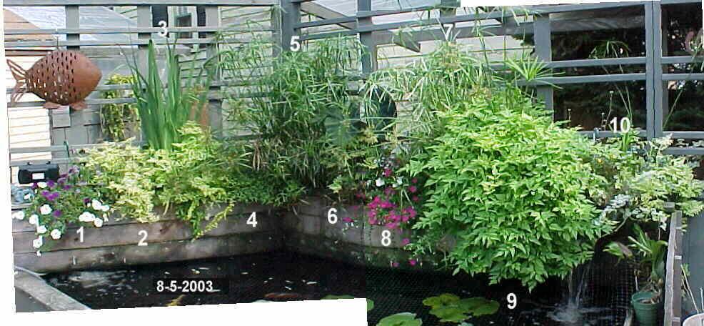 My koi pond august 2003 part 2 for Pond veggie filter