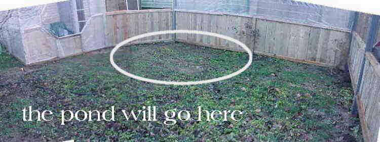 My koi pond for Pond veggie filter